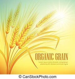 Wheat field  background. Vector illustration