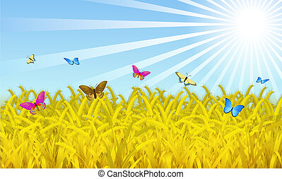 Wheat field. - Wheat on the sky background is shown in the...