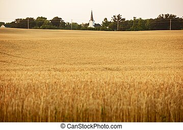 Wheat Field in Illinois