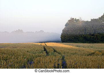 Wheat field morning fog forest tree bluet flower