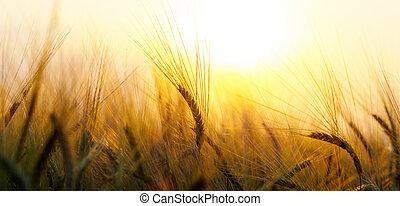 Wheat field on setting sun - Wheat field on the background...