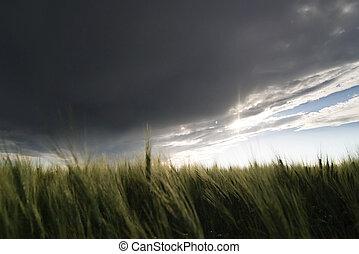 Wheat Field - Prairie Wheat Field looking into the sun on a...