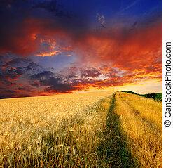 wheat field - majestic sunset in a wheat field