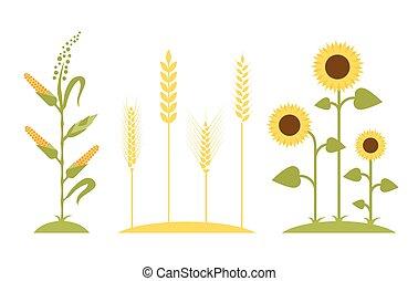 Wheat field. Sunflower icon cartoon.
