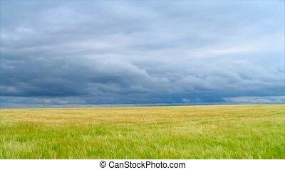wheat field, timelapse