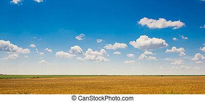 Wheat field under cloudy sky. Yellow field under beautiful ...