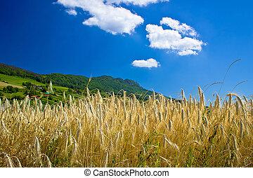Wheat field under colorful mountain, Kalnik mountain,...