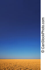 Wheat field under the blue sky with the white clouds sunny vertical wallpaper panorama