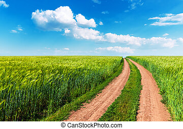 Wheat field, winding road and blue sky with clouds