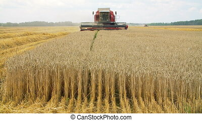 Wheat field with a combine harvester on a sunny summer day