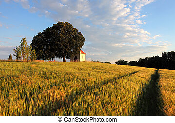 wheat field with chapel in Slovakia