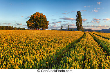 wheat field with chapel in Slovakia