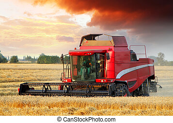 Wheat field with Harvester machine at sunset