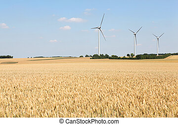 wheat field with wind turbines