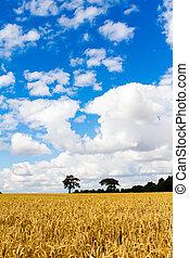 wheat fields blue sky black tree