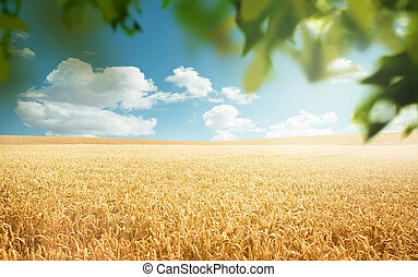 Wheat Fields In The Countryside