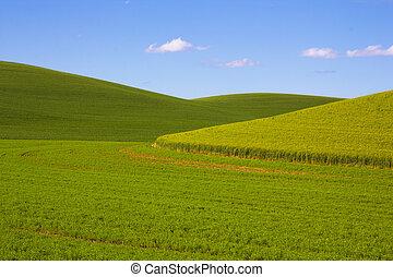 Wheat Fields in the Palouse