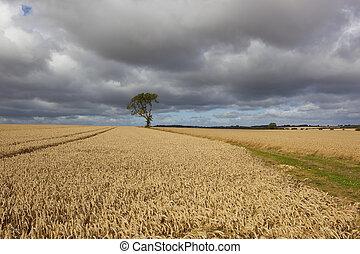 wheat fields under stormy skies
