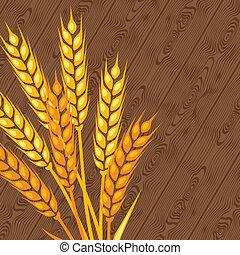 wheat., fondo, orecchie