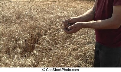 Wheat is a plant used to make flour and then bake bread.