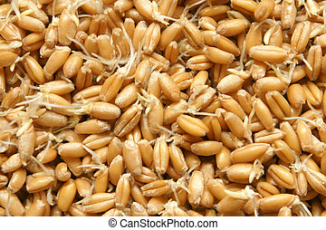 Wheat germs macro texture background