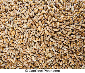 Wheat grain as a background