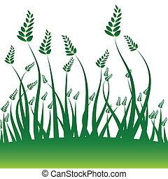 Wheat Grain Background