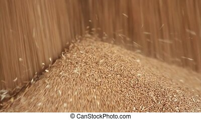 Wheat grain close-up. Wheat is unloaded from truck at flour...
