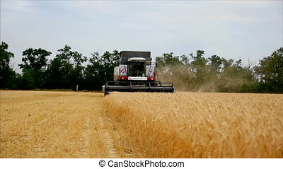 Wheat Grain in a Background Agricultural Machinery Combine...