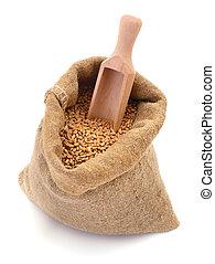 Wheat grain in burlap bag isolated.