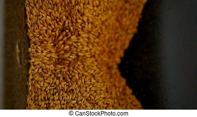 Wheat grain in wheat crusher machine 4k - Overhead of wheat ...