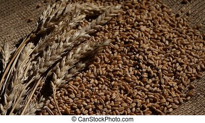 Wheat grain top of the heap with wheat sheaf on the wood background. Rotation. Close up