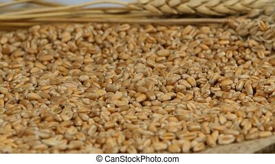 Wheat grains agricultural crop harvest, harvested seed...