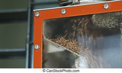 Wheat grains are cleaning and sieving by vibration, modern automated mills