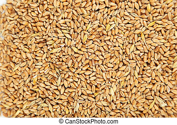 Wheat grains background, close up