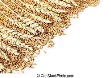 Wheat grains isolated on a white