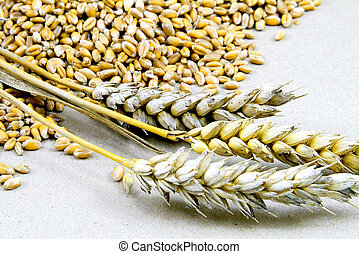 Wheat grains on a white background