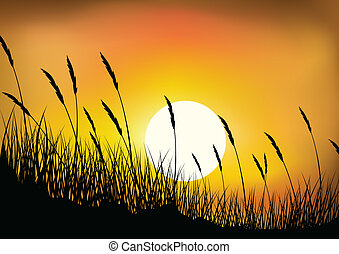 Wheat grass background - Vector Illustration Of Wheat grass...