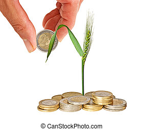 Wheat growing from money