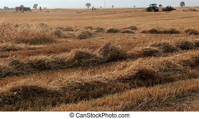 wheat harvest baler machine