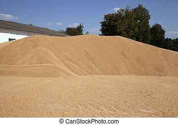 big pile grain