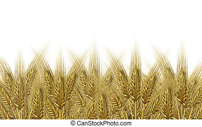 Wheat harvest on a golden horizon of harvesting grass crop as a symbol of healthy whole food for farm baked and fresh organic bakery goods as bread and cerial grains.