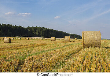 Wheat Harvest Landscape