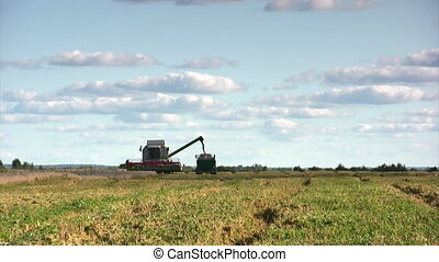 Wheat harvest season