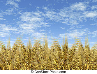 Wheat harvest sky horizon