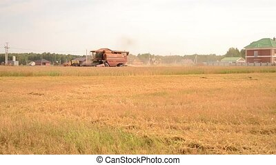 Wheat harvesting - Harvesting wheat with large machines...