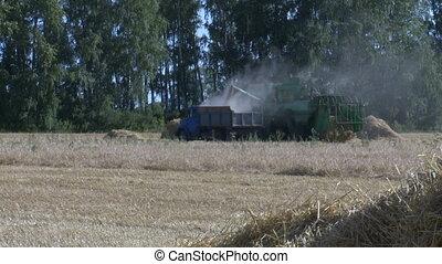 Wheat harvesting shearers 1
