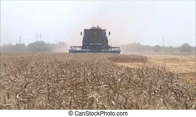 Wheat harvesting shearers 10