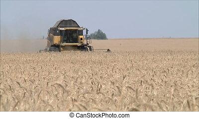 Wheat harvesting shearers 3