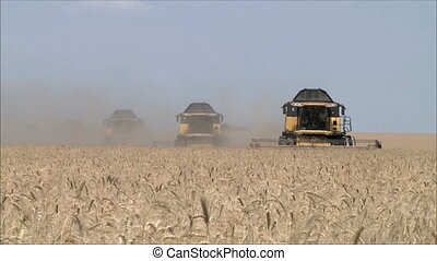 Wheat harvesting shearers 4